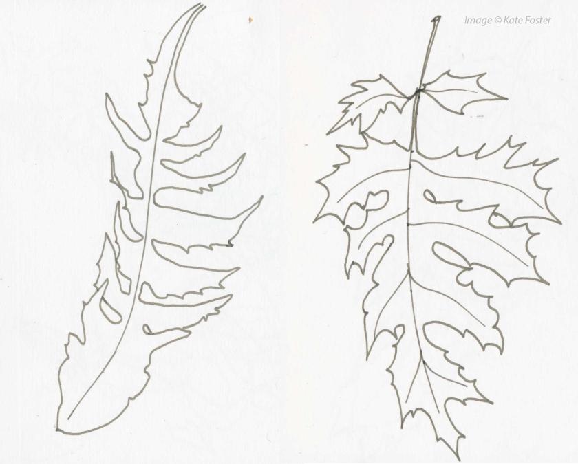 Dandelion-acanthus